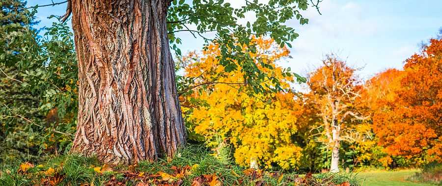 Eichenholz Eigenschaften Verwendung Dichte